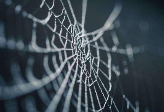 Життя Жертви віника: як павуки плетуть павутиння природа стаття тварини