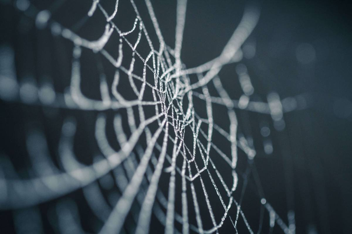 Жертви віника: як павуки плетуть павутиння