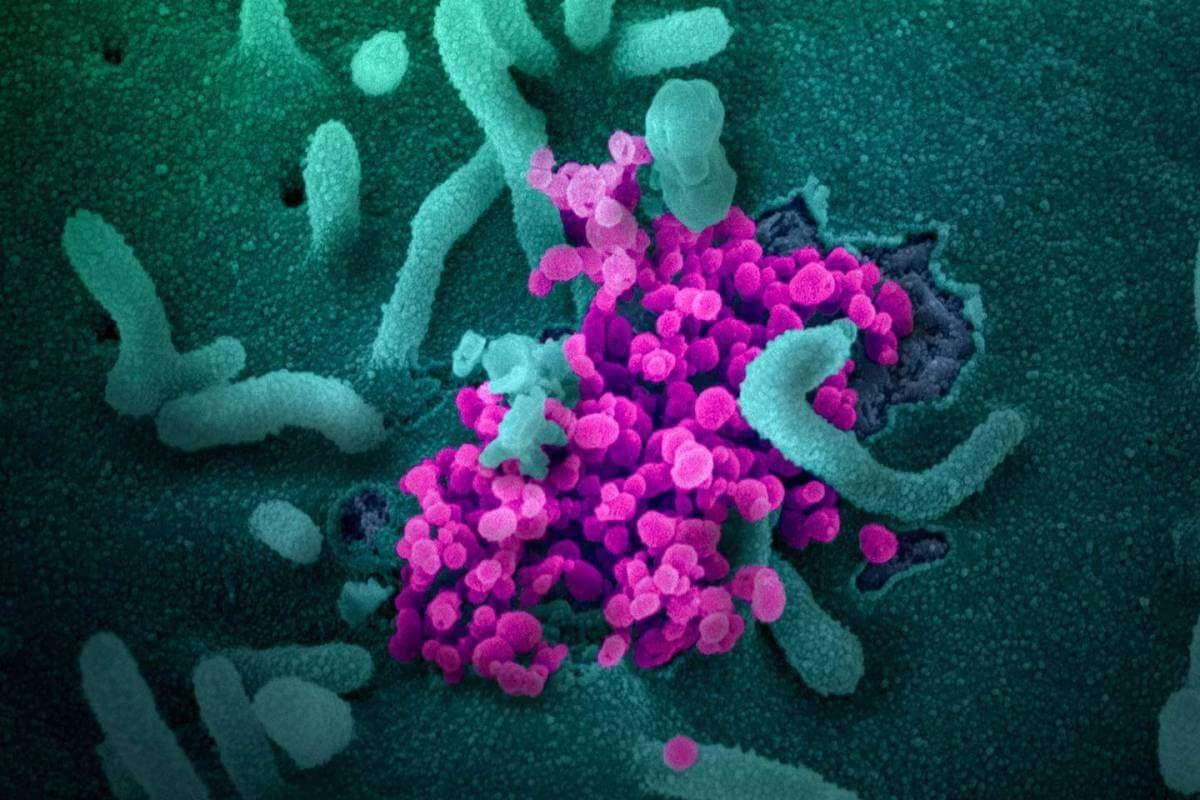 коронавірус хороші новини 2