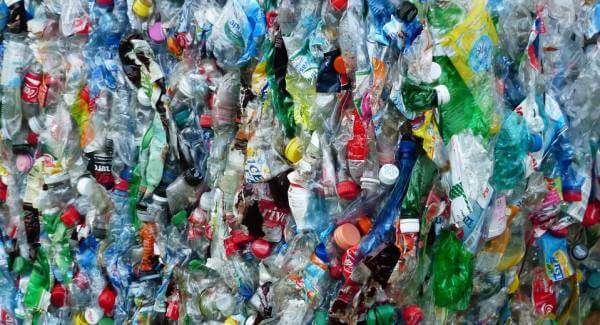 Вчені знайшли бактерію, яка харчується пластиком
