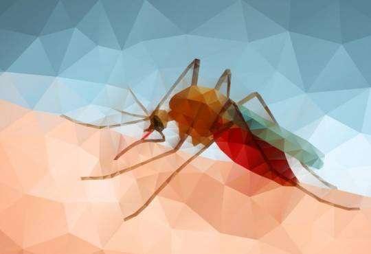 Життя Вчені знайшли мікроб, який допоможе перемогти малярію британія медицина новина у світі