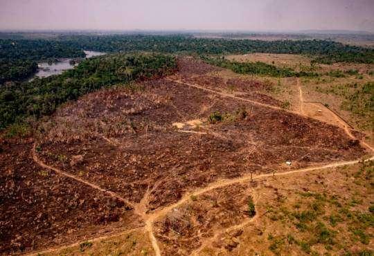 Життя Як вирубка дерев у Амазонії може спричинити новий спалах невідомого досі коронавірусу бразилія медицина новина у світі