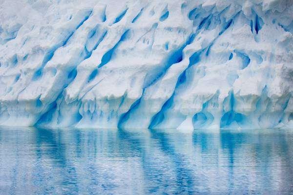 Чому в Антарктиді народилося одинадцятеро дітей?
