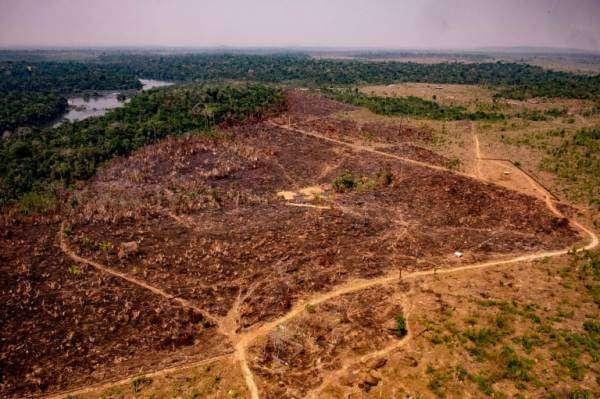 Як вирубка дерев у Амазонії може спричинити новий спалах невідомого досі коронавірусу