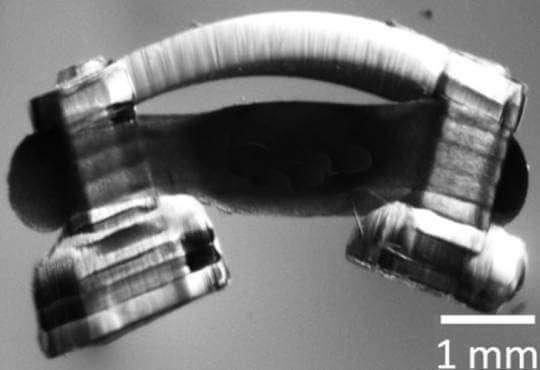 Технології Турбощур: як роблять роботів із біотканин біологія медицина роботи стаття