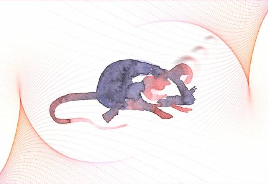 Технології Нова методика генної модифікації лікує глухих мишей здоров'я медицина новина сша