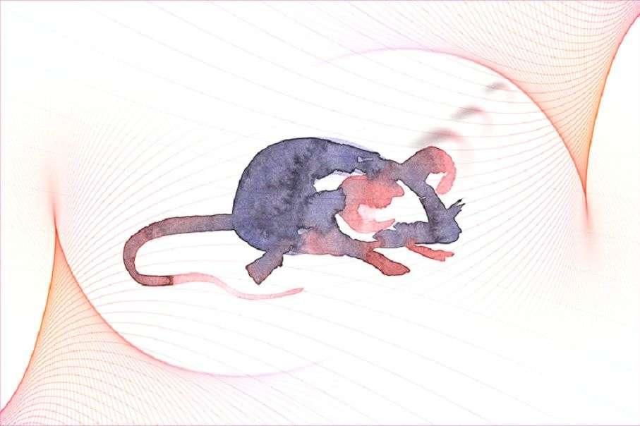 Нова методика генної модифікації лікує глухих мишей