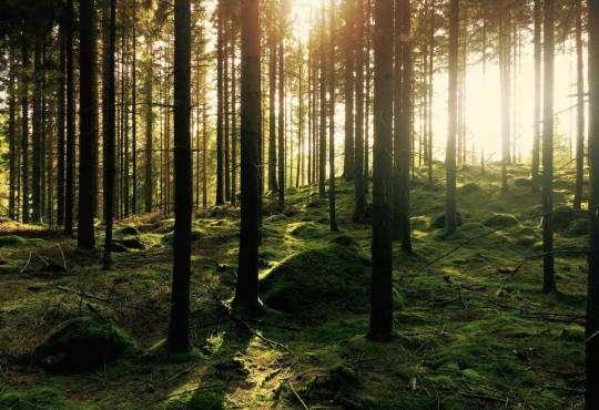 Життя Європейські ліси не здатні адаптуватися до змін клімату екологія клімат стаття