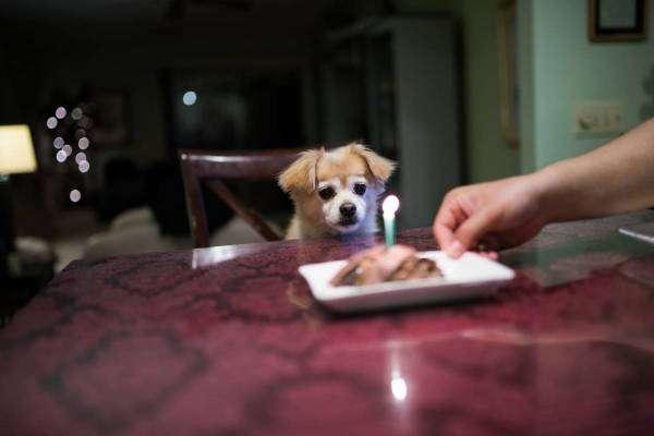 Скільки років вашому собаці за людськими мірками