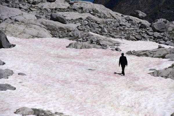 Рожева крига в Альпах як точка неповернення
