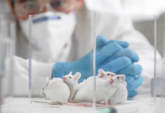 Життя Як тварини допомагають науці зрозуміти COVID-19 коронавірус медицина стаття у світі