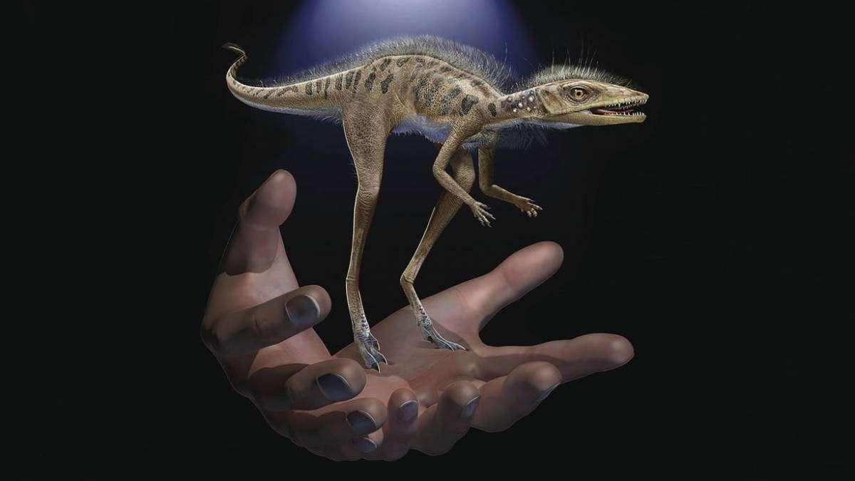 На Мадагаскарі знайшли крихітного предка динозавра