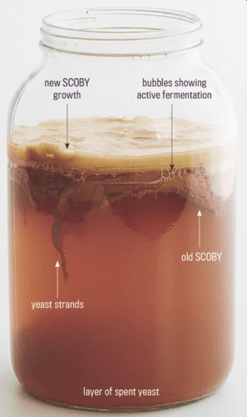 Комбучу – напій із чайного гриба