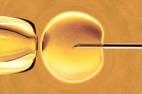 Вчені створили дитину з трьома біологічними батьками