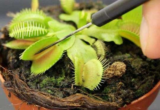 Життя Як анестезія діє на рослини та чому це важливо медицина стаття