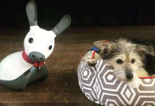 Технології Роботи – нові собаки для психотерапії? Як і чому штучні тварини замінюють справжніх хвостатих здоров'я роботи стаття штучний інтелект