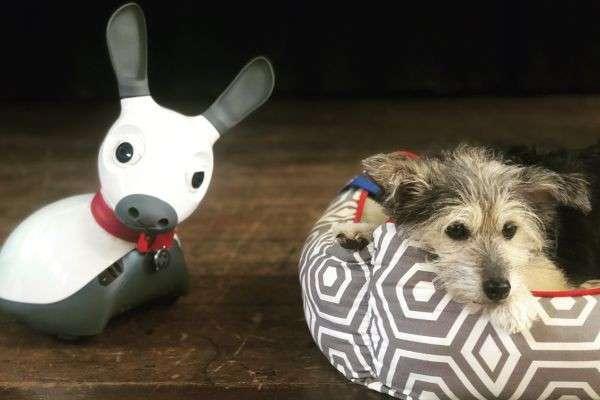 Роботи – нові собаки для психотерапії? Як і чому штучні тварини замінюють справжніх хвостатих