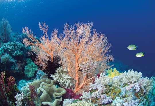 Життя Як водорості та корали рятують риб від аномальної спеки екологія клімат природа