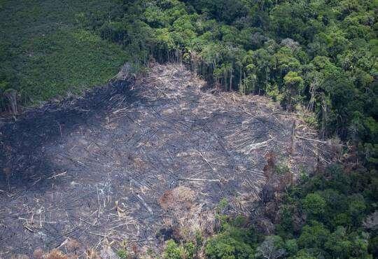 Життя Тропічні ліси Амазонки повністю зникнуть до 2064 року – дослідження екологія земля клімат стаття