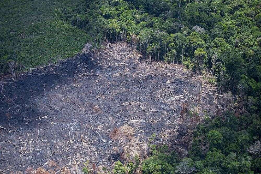 Тропічні ліси Амазонки повністю зникнуть до 2064 року – дослідження