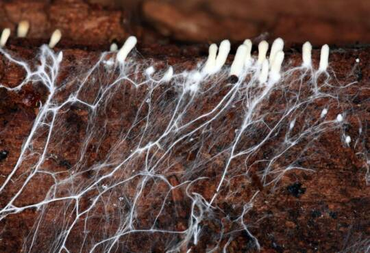 Життя Чи можуть гриби врятувати модну індустрію? екологія природа стаття технології