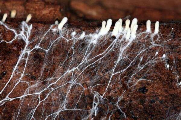 Чи можуть гриби врятувати модну індустрію?