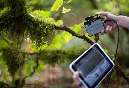 Технології Винайдено девайс, що розпізнає стрес у рослин. Це допоможе збільшити врожайність без хімікатів екологія наука стаття