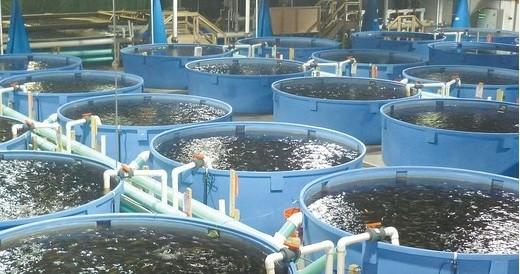 Серйозною проблемою, пов'язаною з наземними об'єктами рибництва, є належний контроль за кількістю необхідних мікроорганізмів та хімічної якості води.