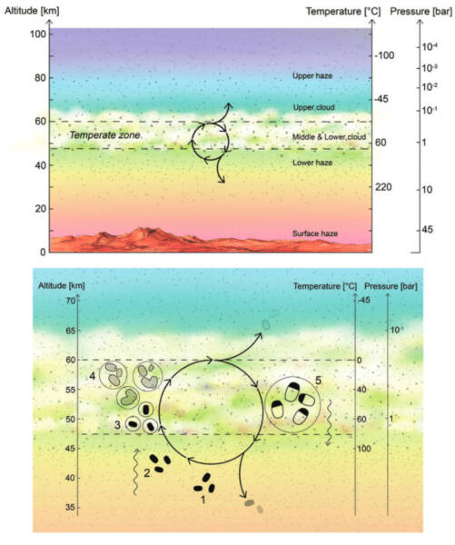 Гіпотетичний кругообіг живих організмів на Венері. Діаграма: Janusz Petkowski