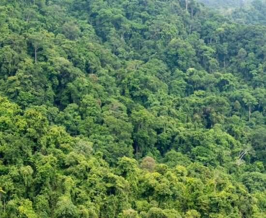 Життя Чому ліси не допоможуть у боротьбі з глобальним потеплінням екологія клімат стаття