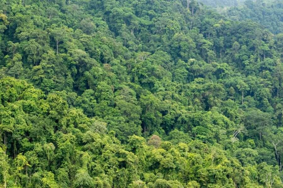 Чому ліси не допоможуть у боротьбі з глобальним потеплінням