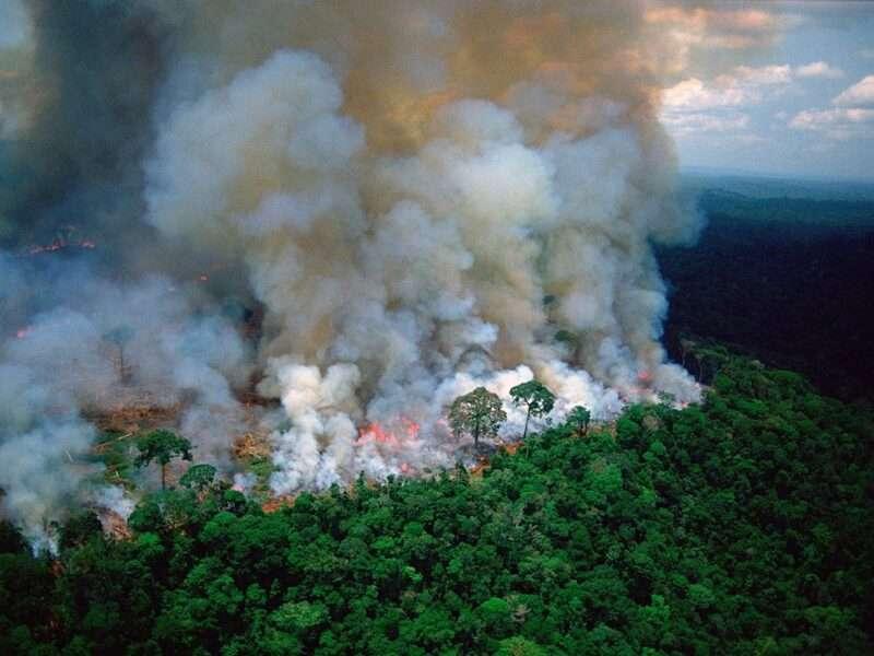 Дослідження було проведено групою з 28 міжнародних вчених, які збирали дані в тропічних лісах бразильської Амазонки.