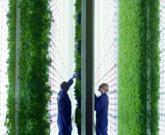 Технології Як і навіщо існують вертикальні ферми? агробізнес екологія стаття