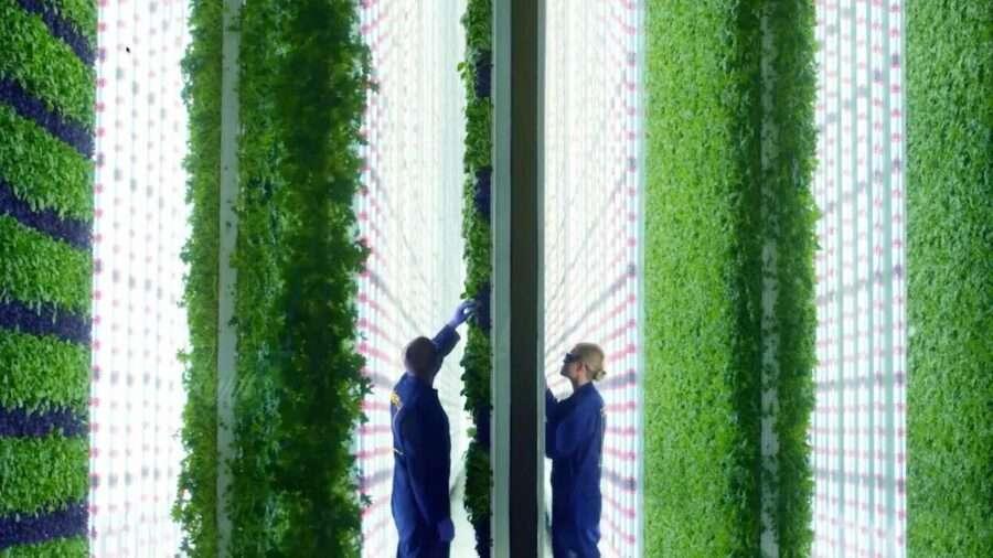 Як і навіщо існують вертикальні ферми?