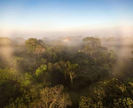 Життя Чому ліси Амазонки посилюють глобальне потепління глобальне потепління клімат природа стаття