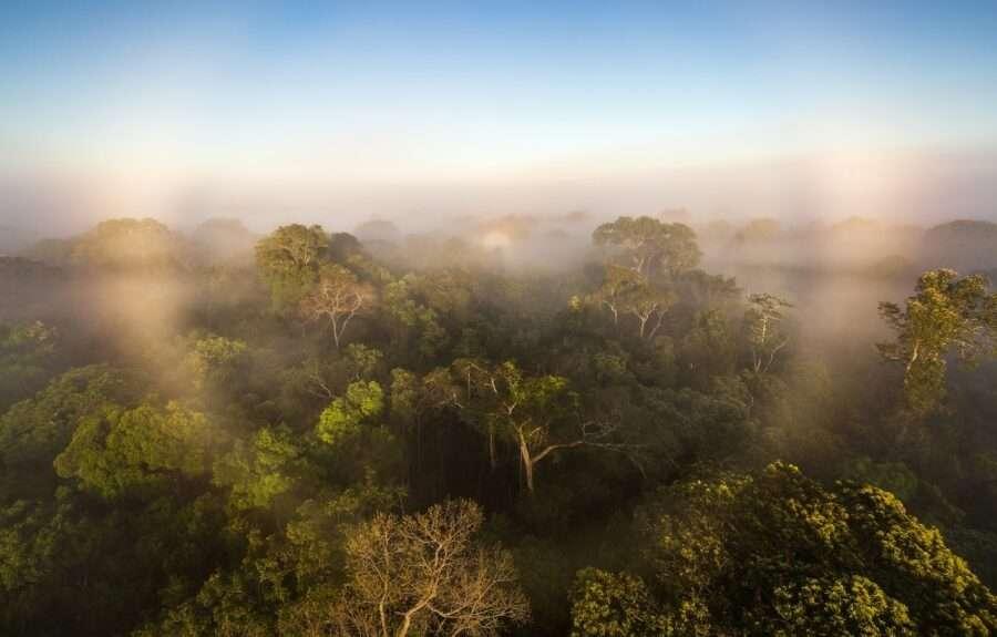 Як і чому амазонські ліси погіршують ситуацію зі зміною клімату