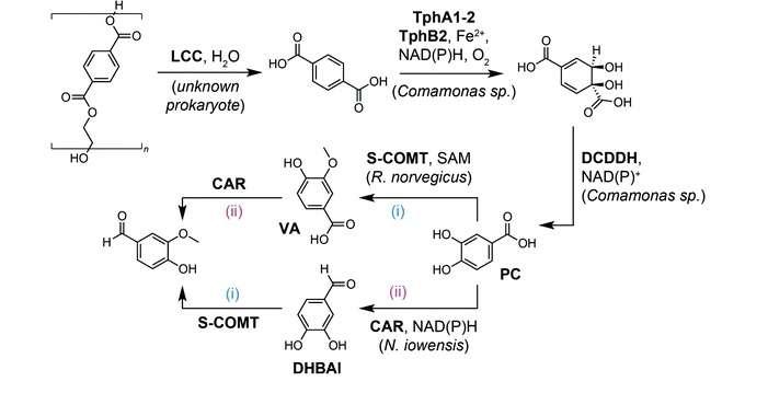 Ферментативний процес перетворення фталевої кислоти у ванілін. Джерело: Green Chemistry