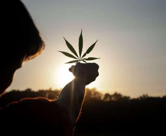 Життя Марихуана може гальмувати розвиток префронтальної кори у підлітків здоров'я марихуана наркотики стаття