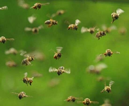 Життя Чому зникають комахи і хто в цьому винен? екологія клімат стаття