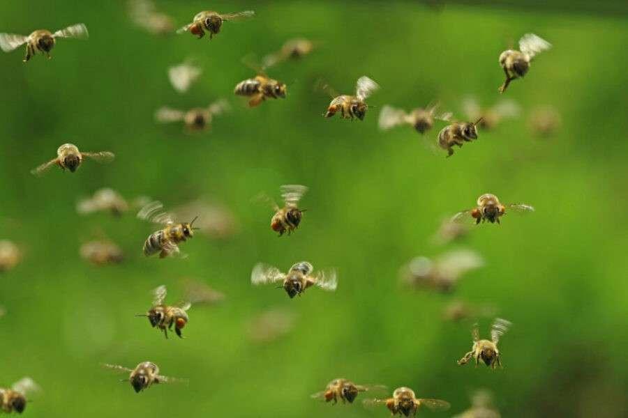Чому зникають комахи і хто в цьому винен?