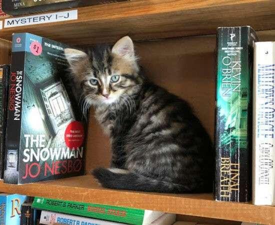 Життя У Канаді є унікальна книгарня, де разом із книгою можна придбати кошеня канада книги тварини у світі
