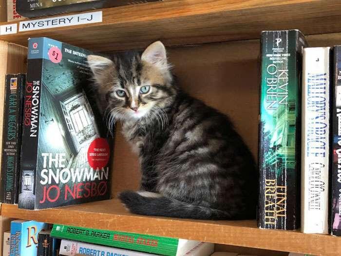 У Канаді є унікальна книгарня, де разом із книгою можна придбати кошеня