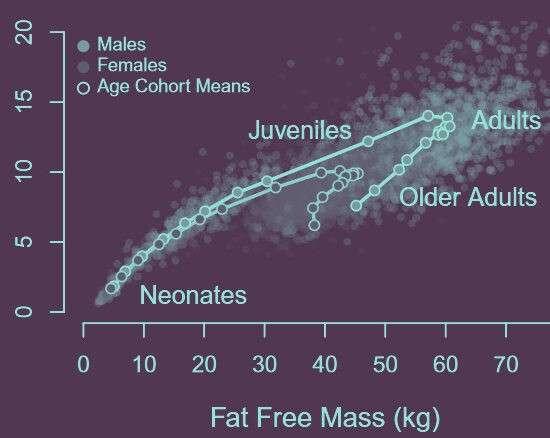Життя Чому маса тіла не впливає на нашу енергозатратність? здоров'я стаття суспільство