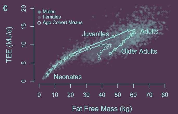 Чому маса тіла не впливає на нашу енергозатратність?