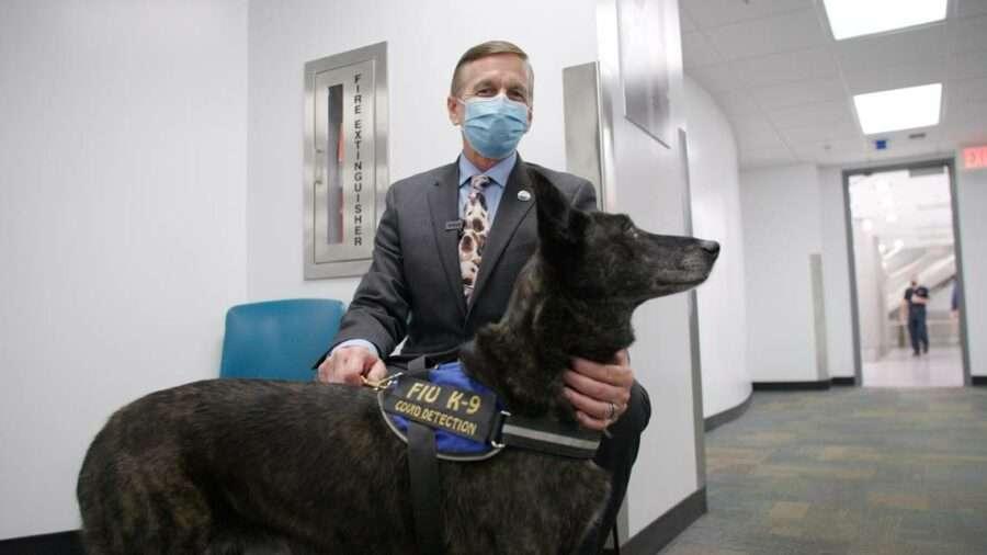 В міжнародному аеропорту Маямі працюють собаки, що виявляють COVID-19